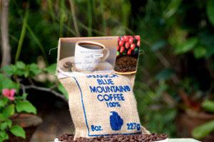 falmouth coffee caribbean cruise drink