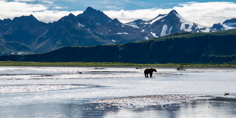 kodiak alaska luxury cruise mountains bear
