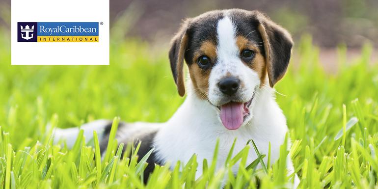 royal caribbean beagle
