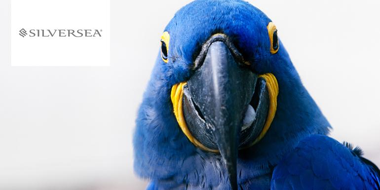 silversea hyacinth macaw