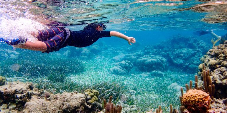 belize city snorkeling reef coral fish