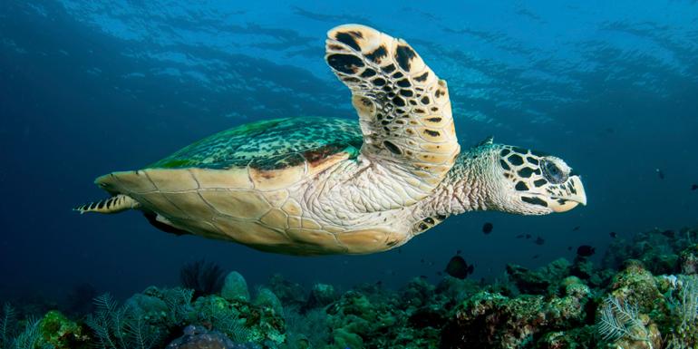 sea turtles penguins australia new zealand