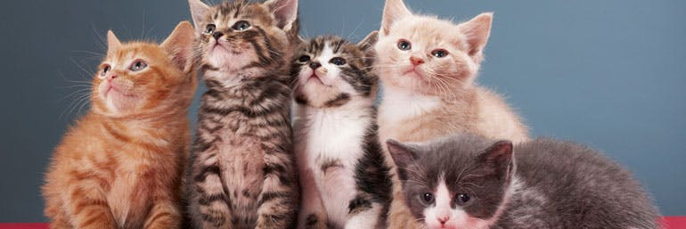 Cat Cruise: You already spend half your day looking at pictures of cats on the internet. Why not make a vacation out of it?