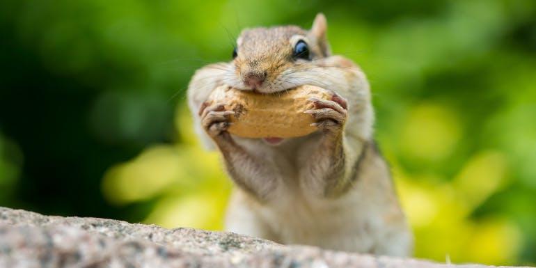 squirrel food weirdest reviews 2018 cruise