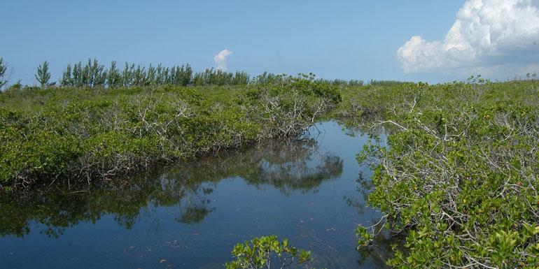 lucayan national park freeport grand bahama