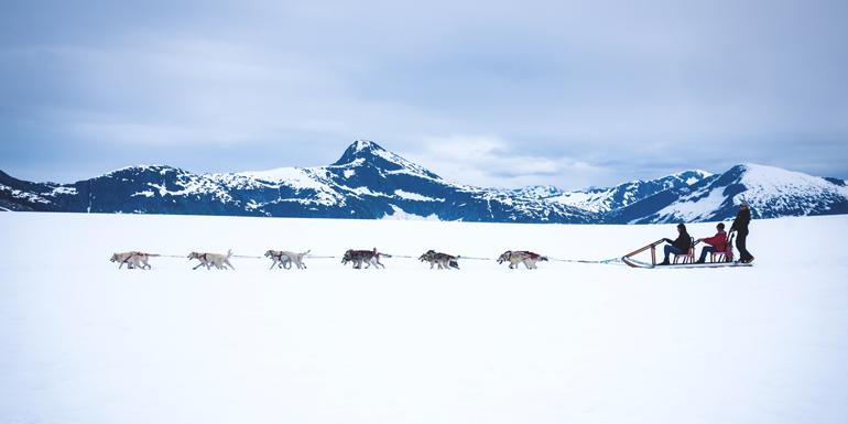 dog sledding alaska shore excursion