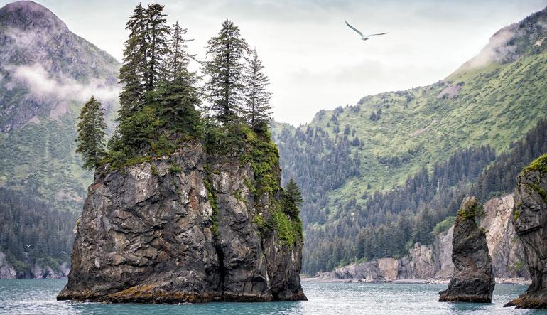 kroschel wildlife center alaska cruise tours
