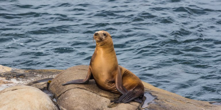 san diego seal zoo cruise port