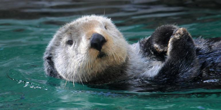 seattle aquarium sea otter cruise port